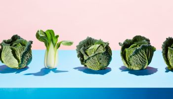 A row of cabbages with one bok choy
