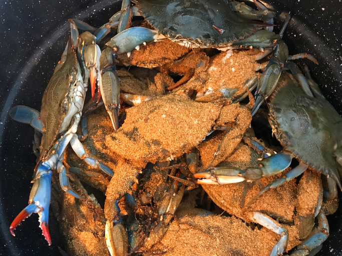 Close up View of Crabs Steaming in a Large Pot